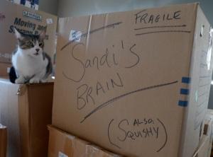 sandi brain box