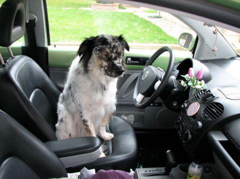buddy driver