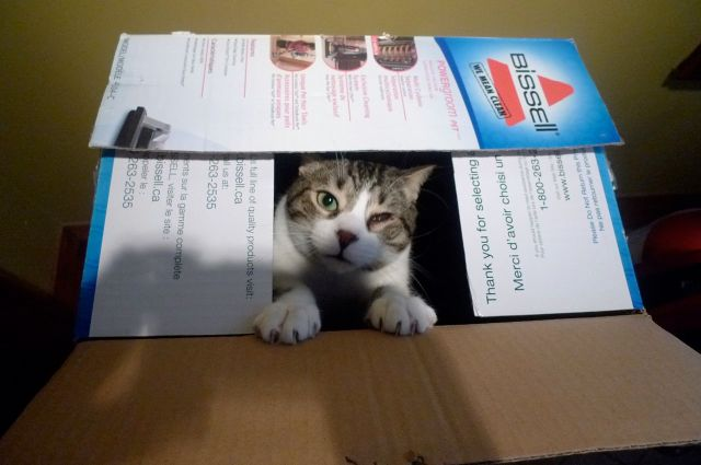 tim in a box