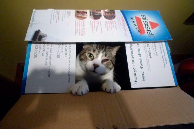 tim in a box
