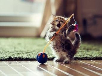 cute-kittens-001-09072013