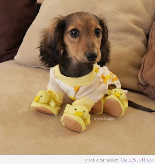 puppy with jammies and duck slippers