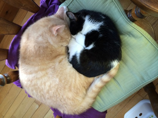 ben-and-tessa-curled-up